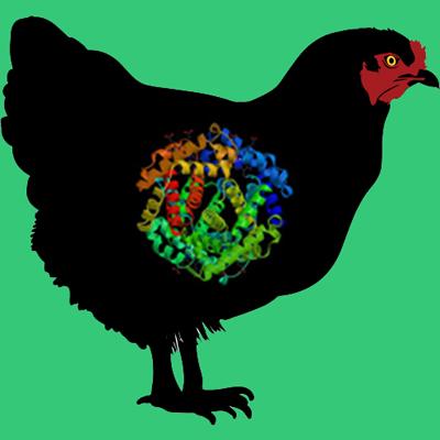 Plasminogen Depleted Chicken Serum