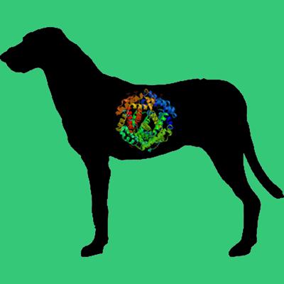 Dog Fibrinogen