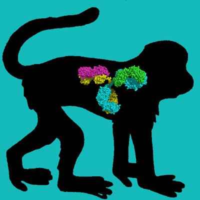 Cyno Monkey IgG1 Isotype Control