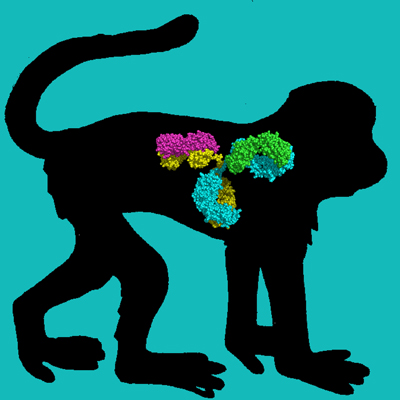 Rhesus Monkey IgG, Protein A Purified