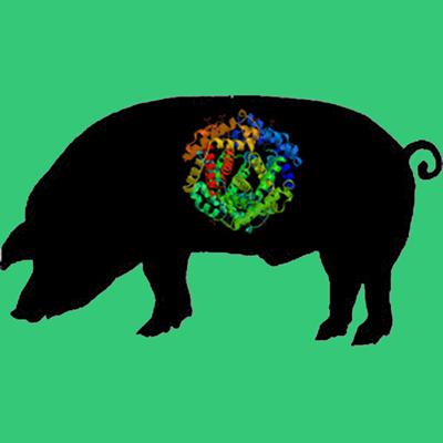 Porcine multimeric vitronectin