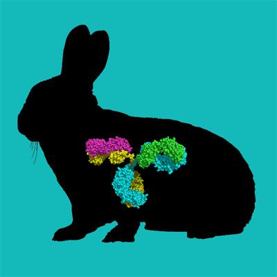 Biotin labeled rabbit IgG