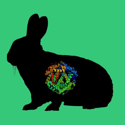 Rabbit plasmin