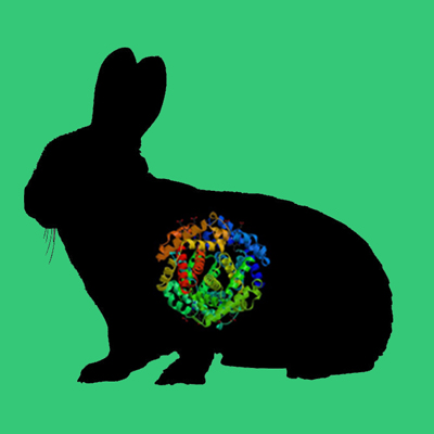 Rabbit multimeric vitronectin