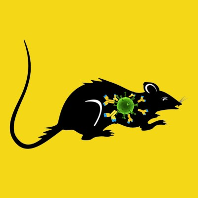 Sheep anti rat & mouse prorenin/renin IgG fraction