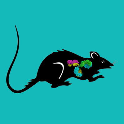 Rat IgG, Protein A Purified