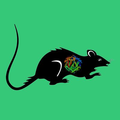 Rat plasmin