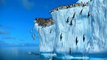 Веселая песня - Пингвины