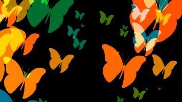 Цветные бабочки - футаж
