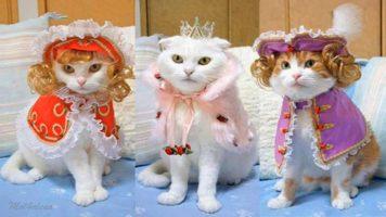 Текст песни – Кошки и коты