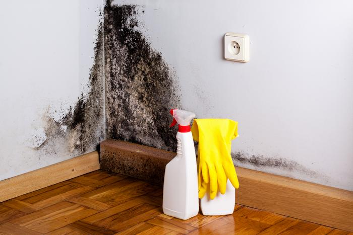 Mold Inspection Burien