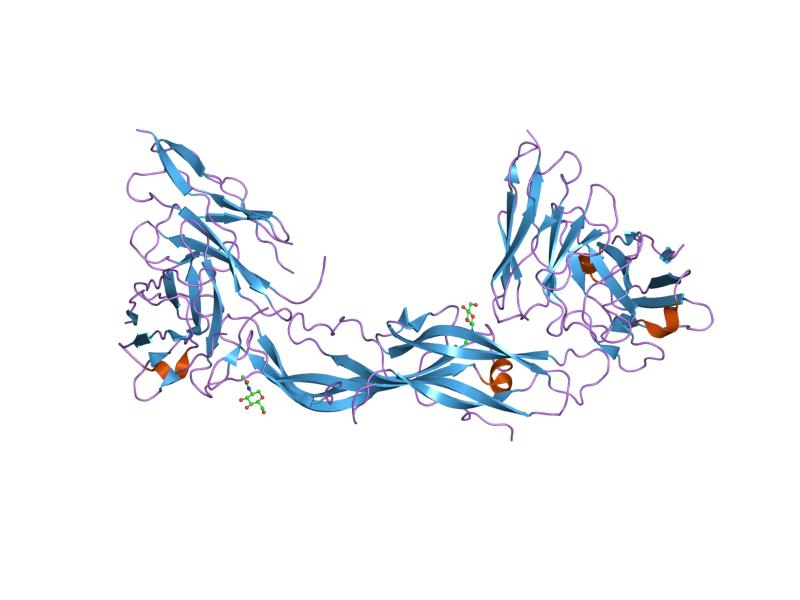 Antibody to Human Chorionic Gonadotropin hCG