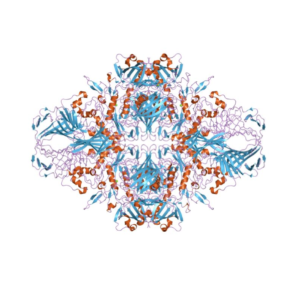 Beta-galactosidase Alpha Complementation Kit