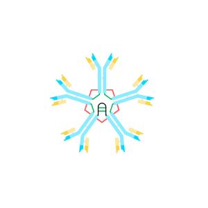 Anti IgM Antibody Monoclonal