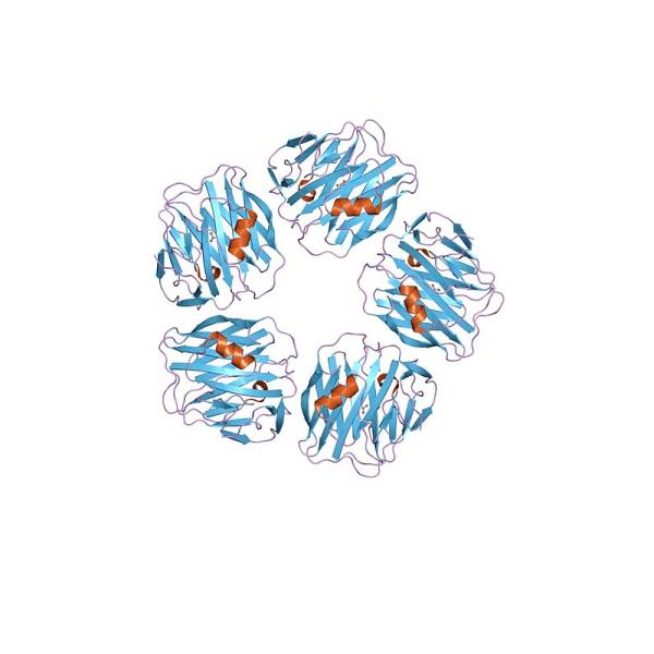 Recombinant Human Serum Amyloid A1 (SAA)