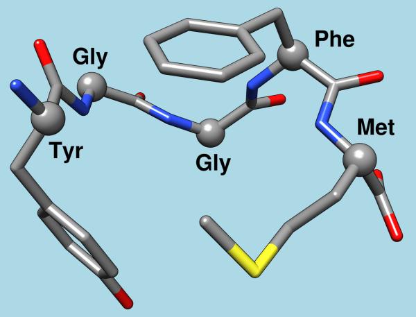 enkephalin