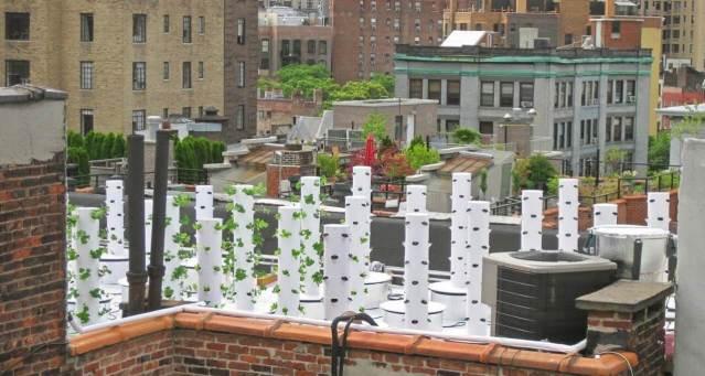 rooftop urban farm