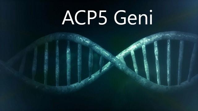 ACP5 GENİ NEDİR?