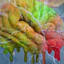 İnsan mini beyinleri kullanılarak yapılan yeni araştırmalar.