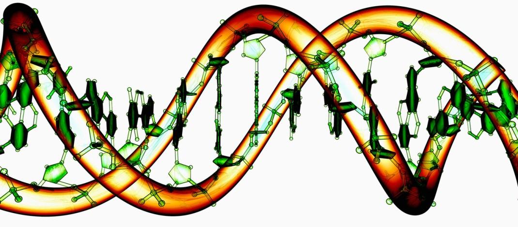 Bilim insanları böbrek yetmezliği,diyabet ve kas distrofisi gibi hastalıkların  tedavisi için CRISPR/Cas9 teknolojisini geliştirdiler