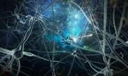 İç kulakta keşfedilen yeni nöronlar işitme bozukluğu için yeni tedavi yöntemlerine yön verebilir