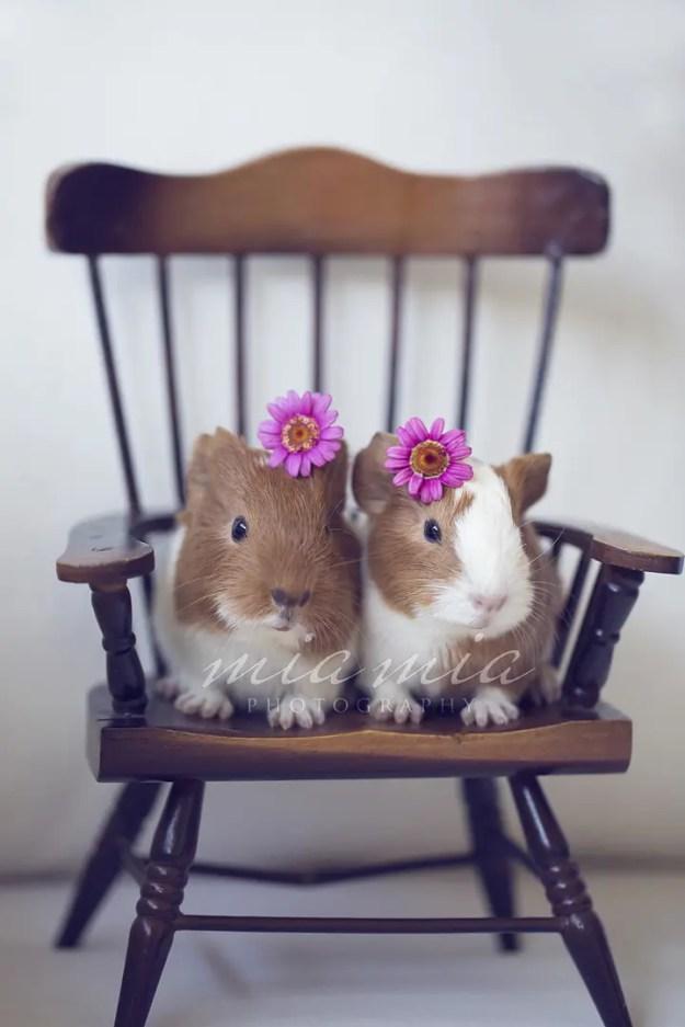 Daisy Cute - Molly and Mama Hair Accessories