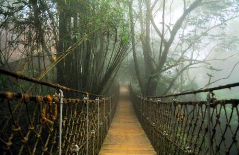 Hanging Bridge at Vythiri Resort