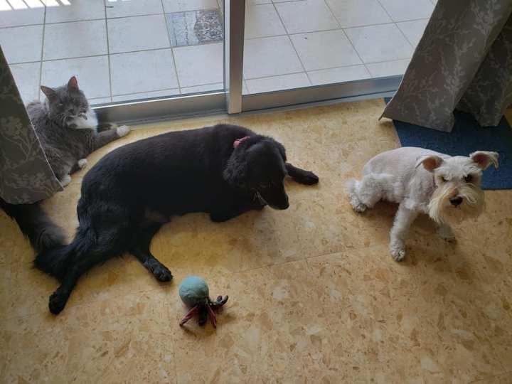 photo of Erwin and Tara's pets