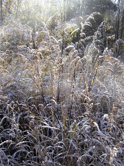 Tuluksak frosty grass