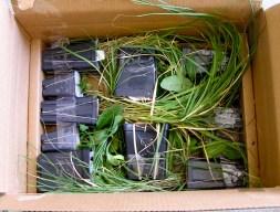 Plants arrive!