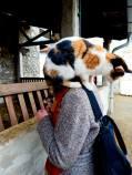 Cat on my shoulder