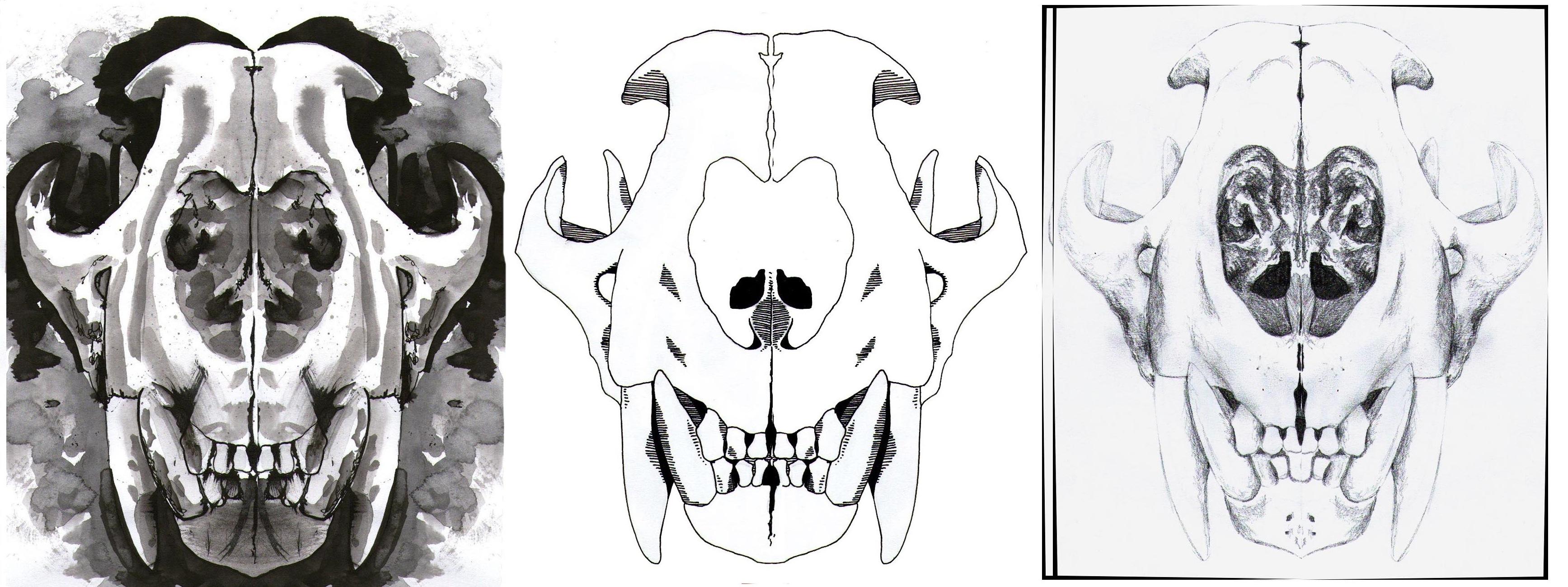 More Tiger Skulls Mollyjeansharp