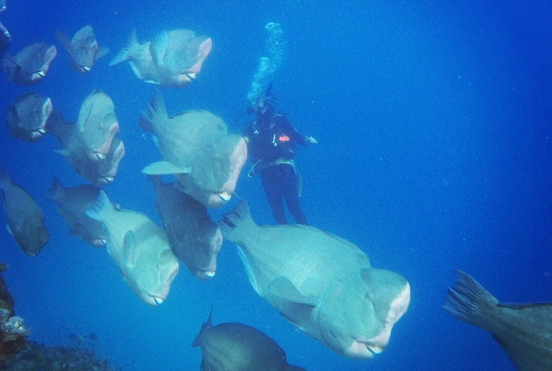 scuba-diving-the-great-barrier-reef