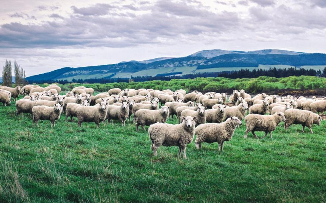 Inspired Quote of the Day: The Voice of the Good Shepherd