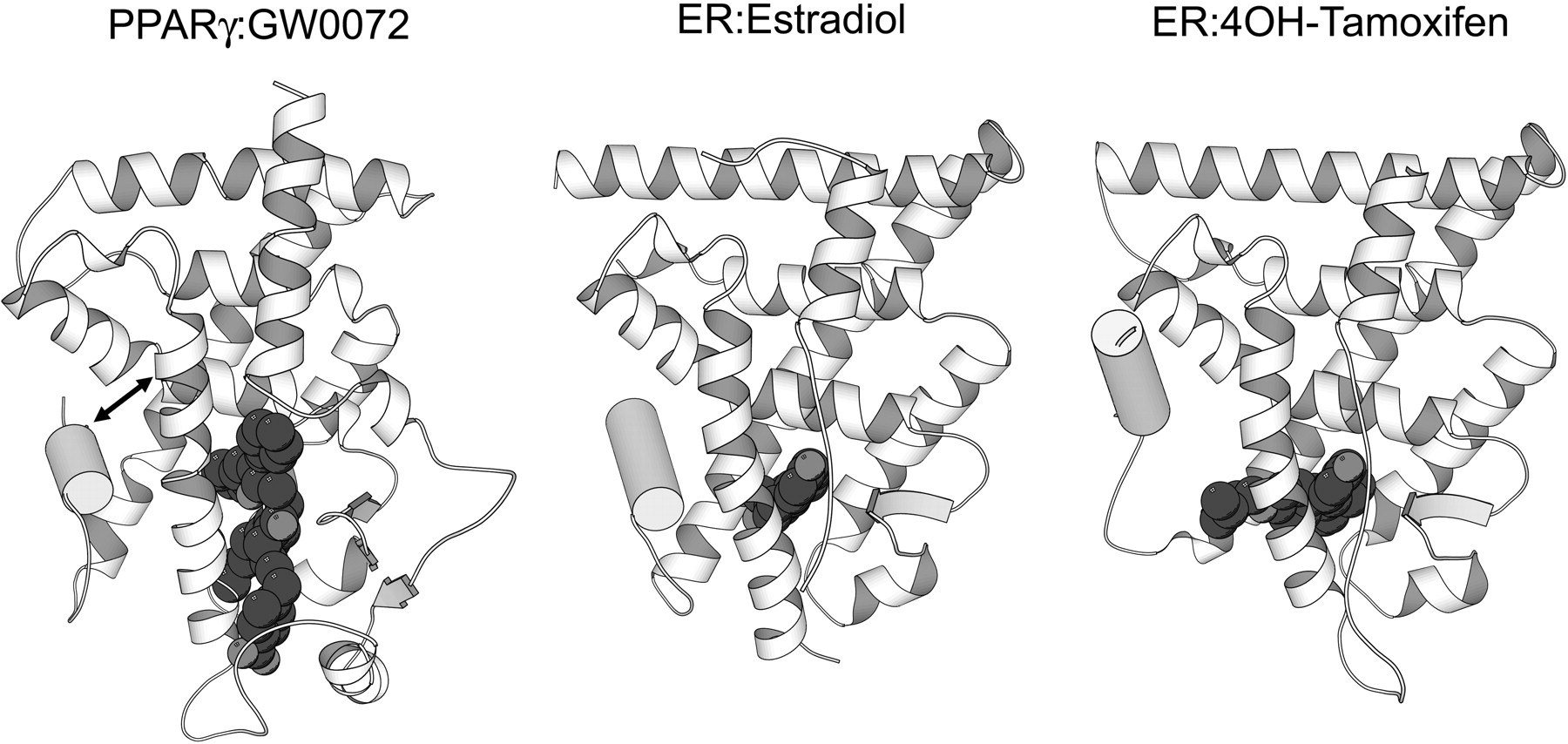 Molecular Mechanisms Of Cytochrome P 450 Induction By