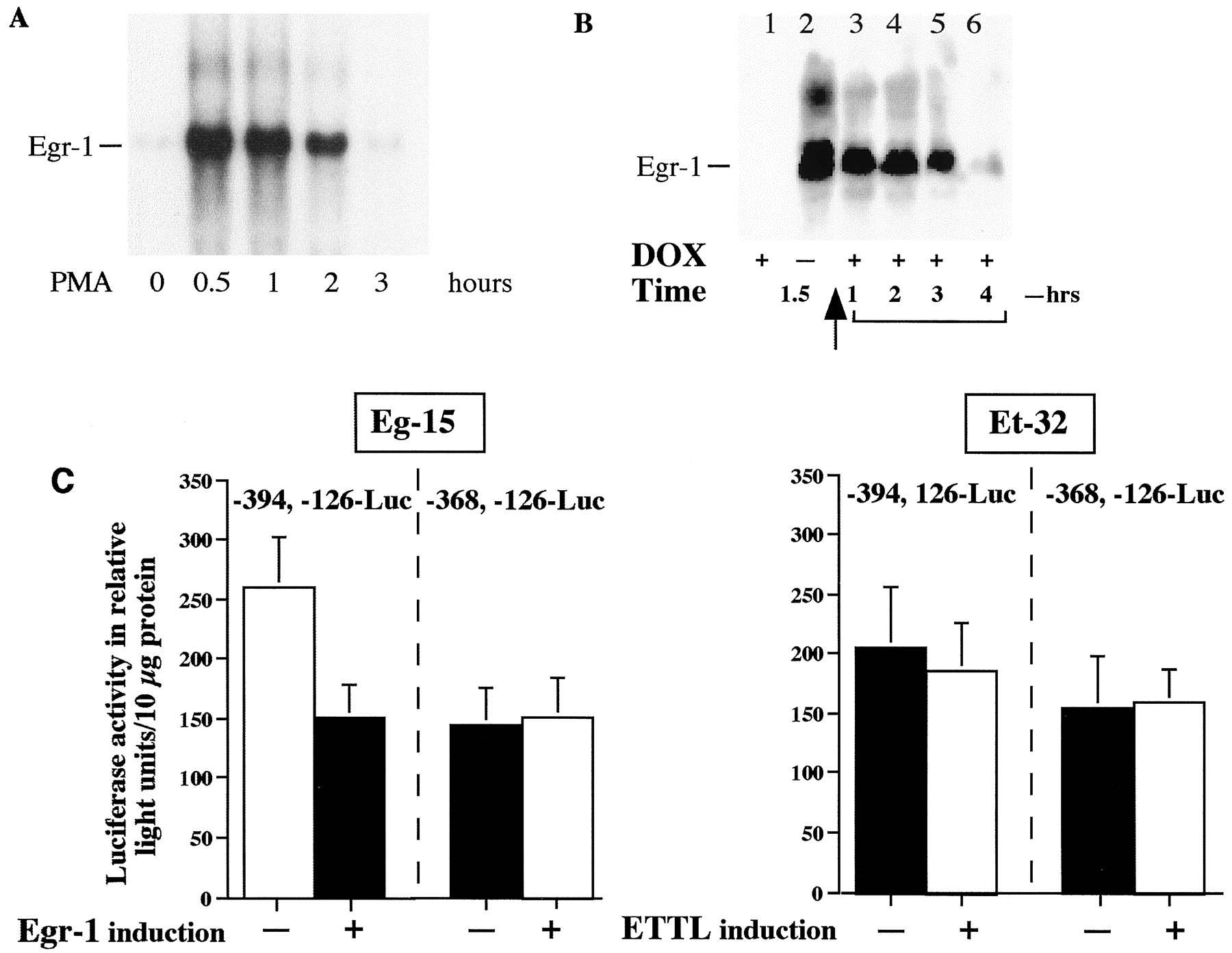 Reciprocal Regulation of β1-Adrenergic Receptor Gene