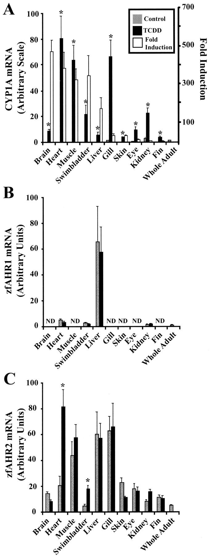 The Zebrafish (Danio rerio) Aryl Hydrocarbon Receptor Type