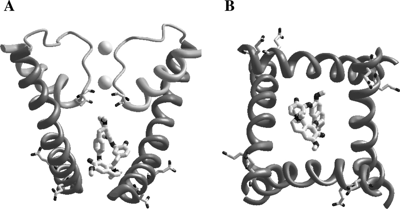 Interaction of d-Tubocurarine with Potassium Channels