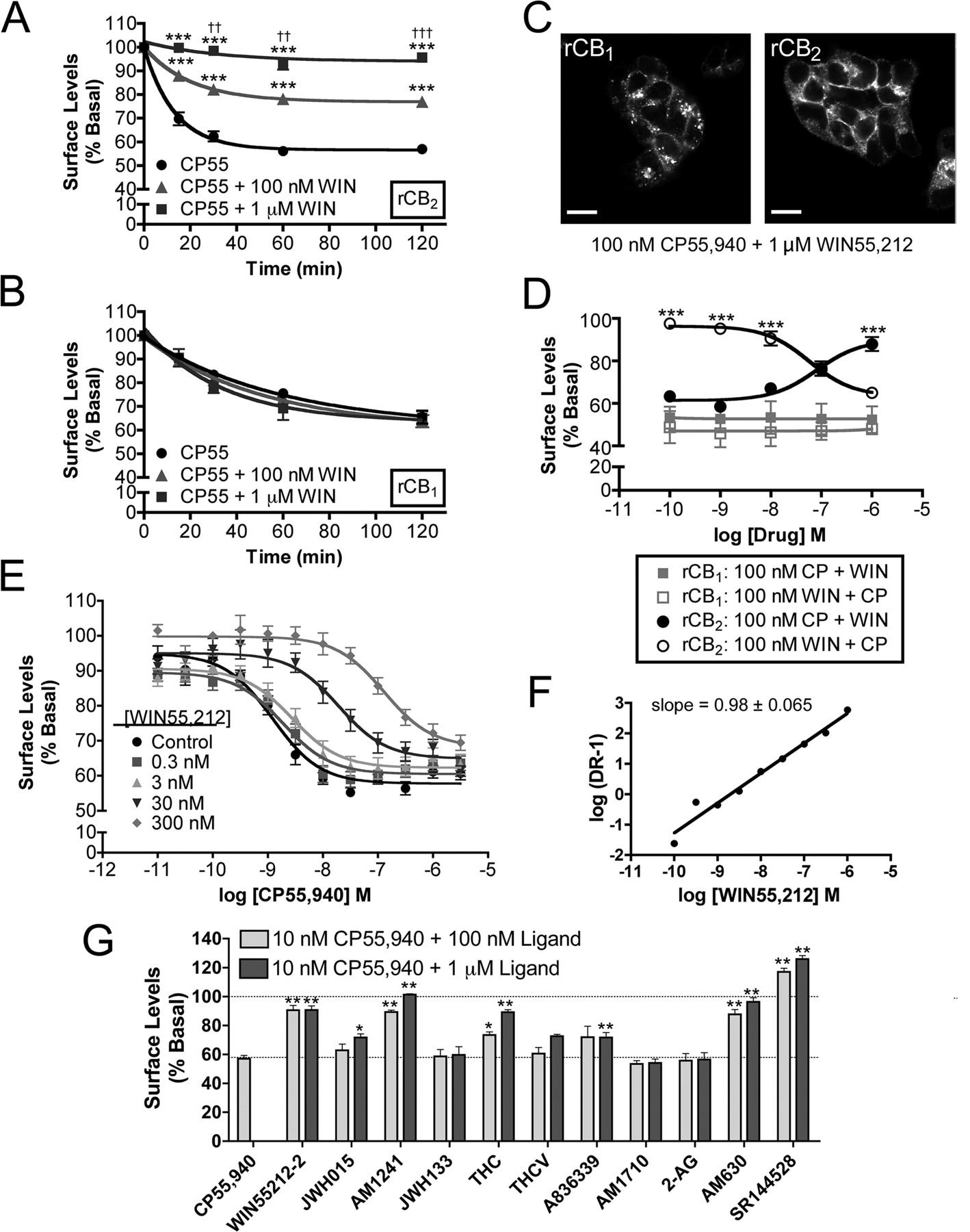 Functional Selectivity in CB2 Cannabinoid Receptor