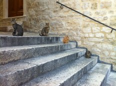The stray cats of Split