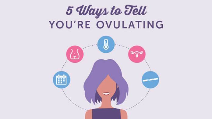 how to predict ovulation