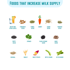 foods to increase breast milk supply