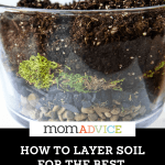 How To Make A Succulent Terrarium Momadvice