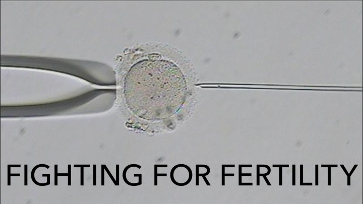 Sperm injection into egg - CREDIT: © 2021 WGBH Educational Foundation
