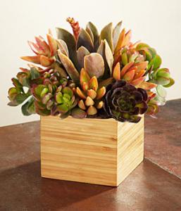 succulent_pot