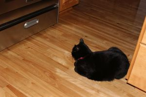 Staring, obsessing about the oven.