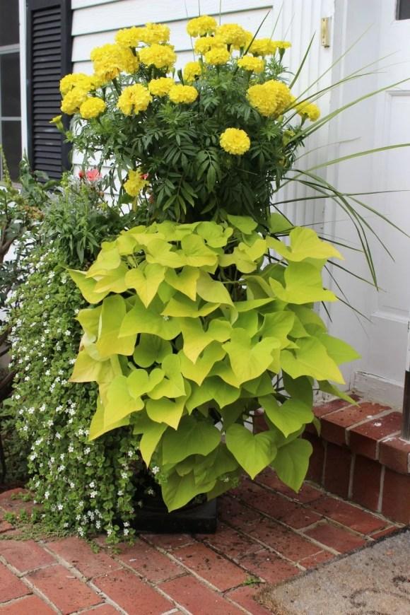 pretty planter, marigold planter
