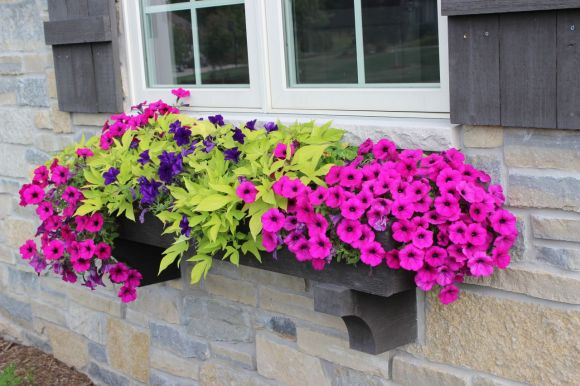 pretty planter, window box, planter ideas