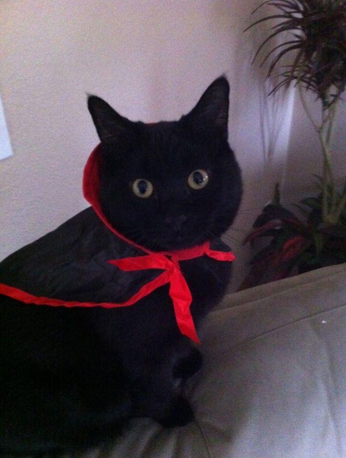 My black cat & Happy Halloween!