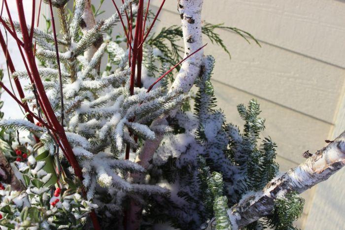 Christmas planters
